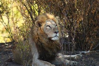 [Reisen] Süd Afrika – Krüger National Park